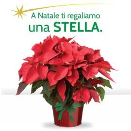 A Natale ti regaliamo una stella!